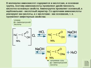 В молекулах аминокислот содержится и кислотная, и основная группа, поэтому ам