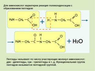 Для аминокислот характерна реакция поликонденсации с образованием пептидов: П