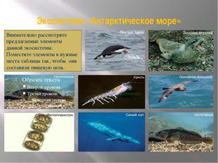 Экосистема «Антарктическое море» Внимательно рассмотрите предлагаемые элемент