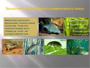 Экосистема «Река умеренного климатического пояса» Внимательно рассмотрите пре