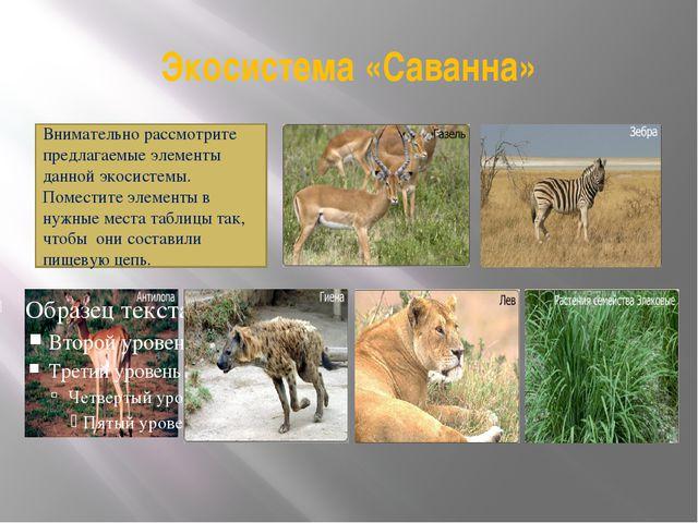 Экосистема «Саванна» Внимательно рассмотрите предлагаемые элементы данной эко...