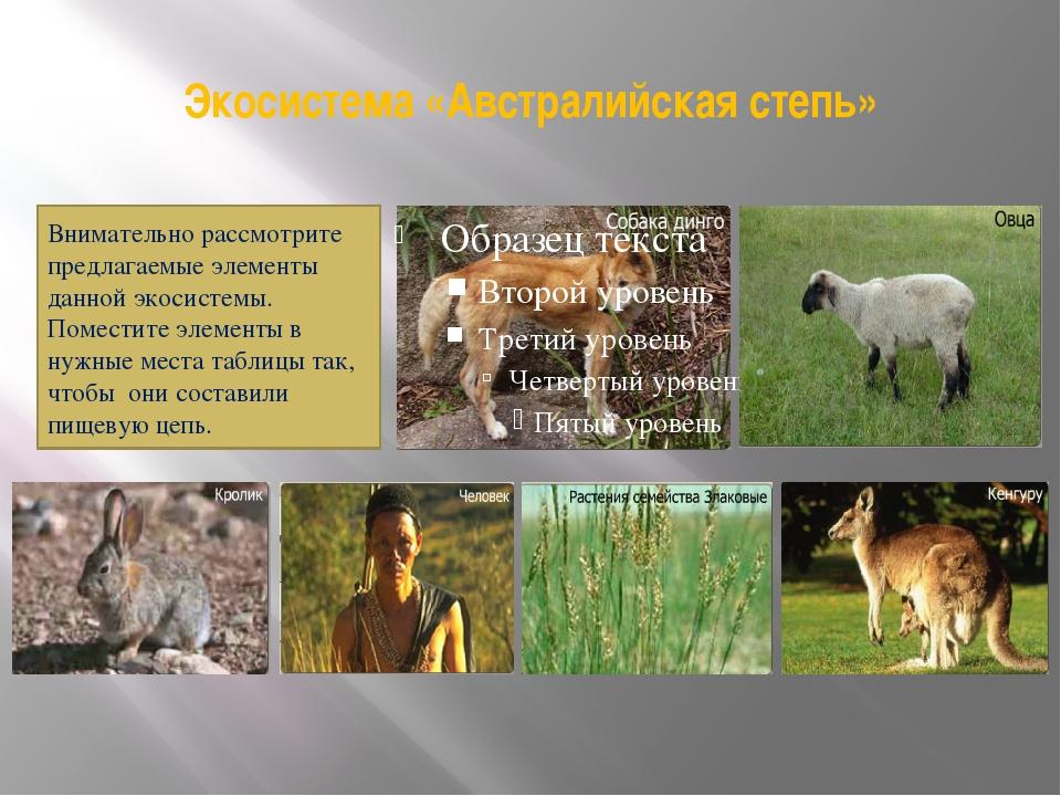 Экосистема «Австралийская степь» Внимательно рассмотрите предлагаемые элемент...