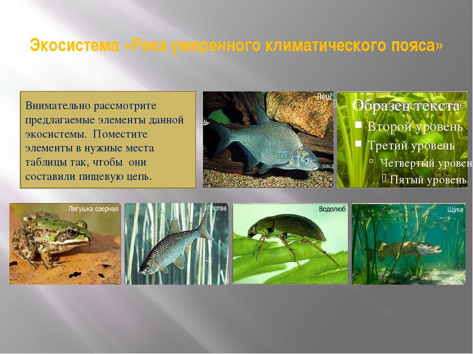 Экосистема «Река умеренного климатического пояса» Внимательно рассмотрите пре...