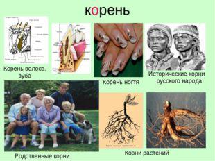 корень Исторические корни русского народа Корень волоса, зуба Родственные кор