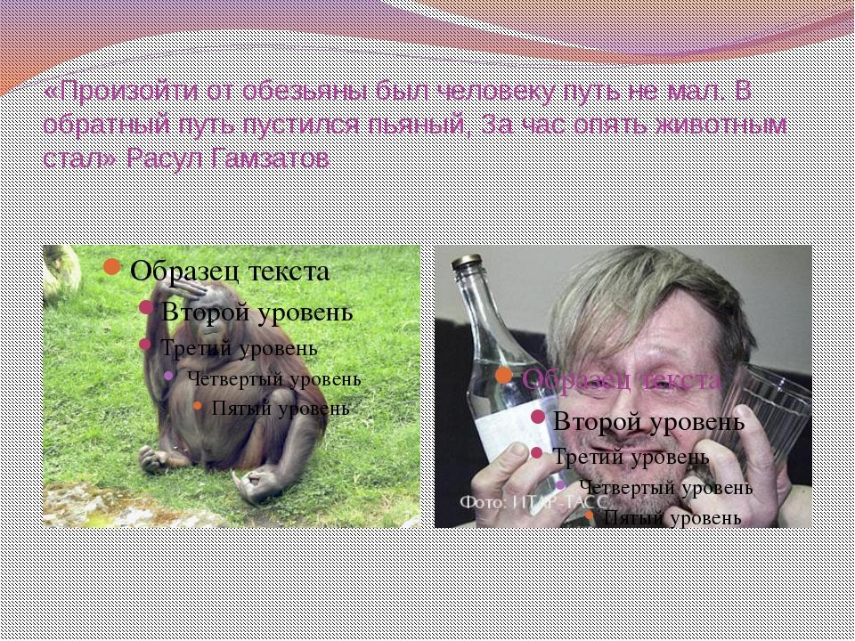 «Произойти от обезьяны был человеку путь не мал. В обратный путь пустился пья...