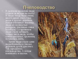 В далеком прошлом люди ходили за медом на охоту! В лесах тогда было очень мно