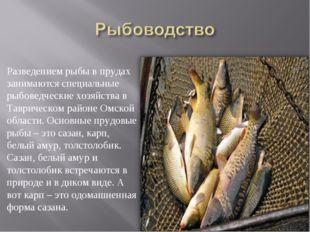 Разведением рыбы в прудах занимаются специальные рыбоведческие хозяйства в Та