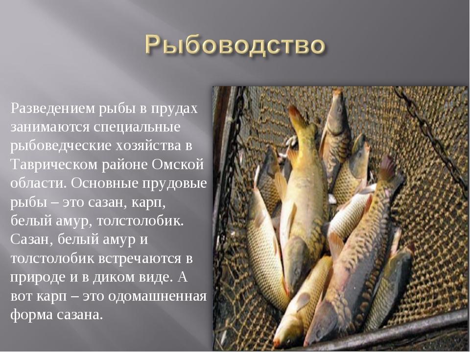 Разведением рыбы в прудах занимаются специальные рыбоведческие хозяйства в Та...