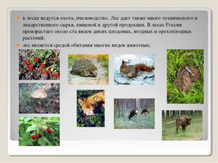 в лесах ведутся охота, пчеловодство. Лес дает также много технического и лека
