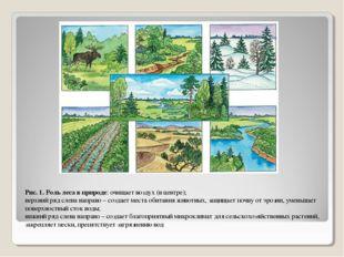 Рис. 1. Роль леса в природе: очищает воздух (в центре); верхний ряд слева нап