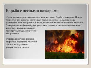 Борьба с лесными пожарами Среди мер по охране лесов важное значение имеет бор