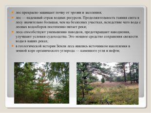 лес прекрасно защищает почву от эрозии и засоления; лес — надежный страж водн