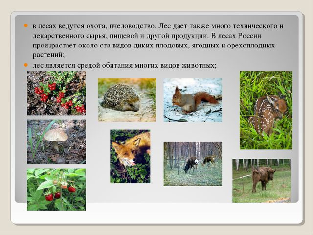 в лесах ведутся охота, пчеловодство. Лес дает также много технического и лека...