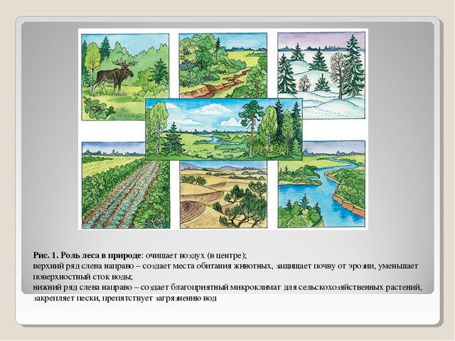 Рис. 1. Роль леса в природе: очищает воздух (в центре); верхний ряд слева нап...