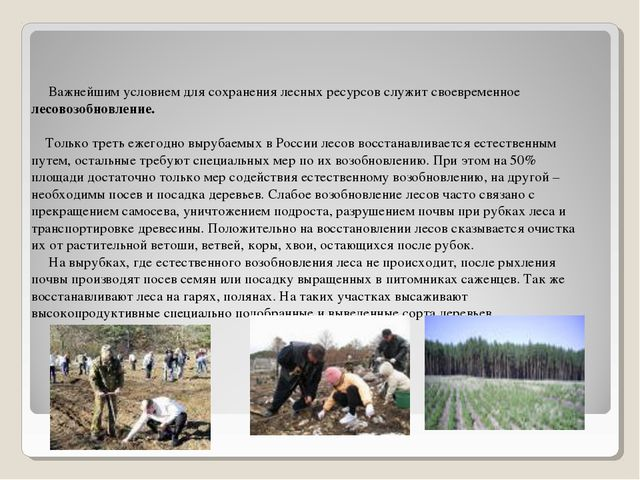 Важнейшим условием для сохранения лесных ресурсов служит своевременное лесов...