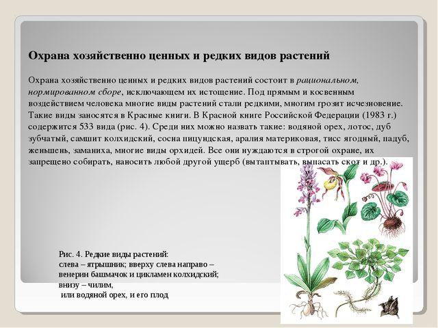 Охрана хозяйственно ценных и редких видов растений Охрана хозяйственно ценных...