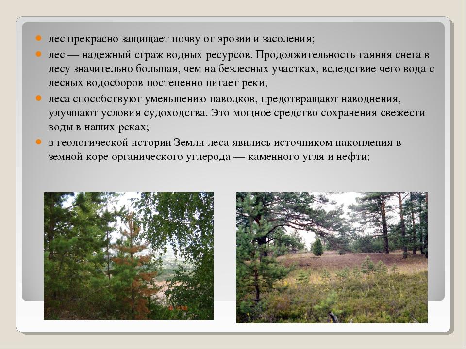 лес прекрасно защищает почву от эрозии и засоления; лес — надежный страж водн...