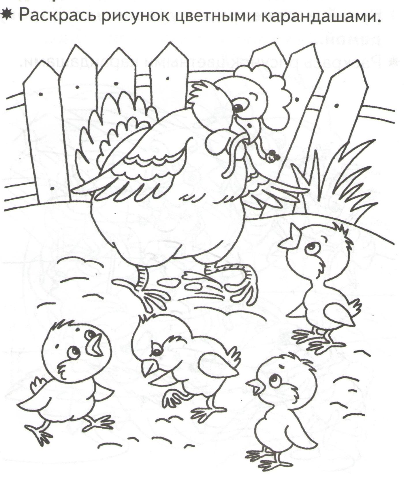 C:\Users\sisadmin\Pictures\приложения 2\2016-02-28 цыплята\цыплята 001.jpg