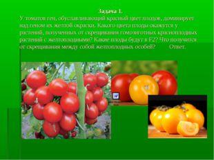 Задача 1. У томатов ген, обуславливающий красный цвет плодов, доминирует над