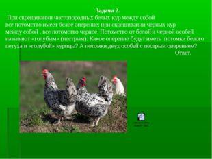 Задача 2. При скрещивании чистопородных белых кур между собой все потомство и