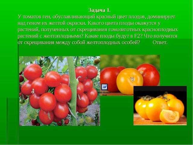 Задача 1. У томатов ген, обуславливающий красный цвет плодов, доминирует над...