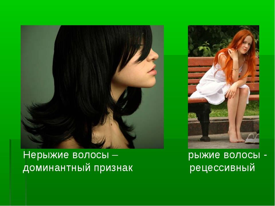 Нерыжие волосы – рыжие волосы - доминантный признак рецессивный