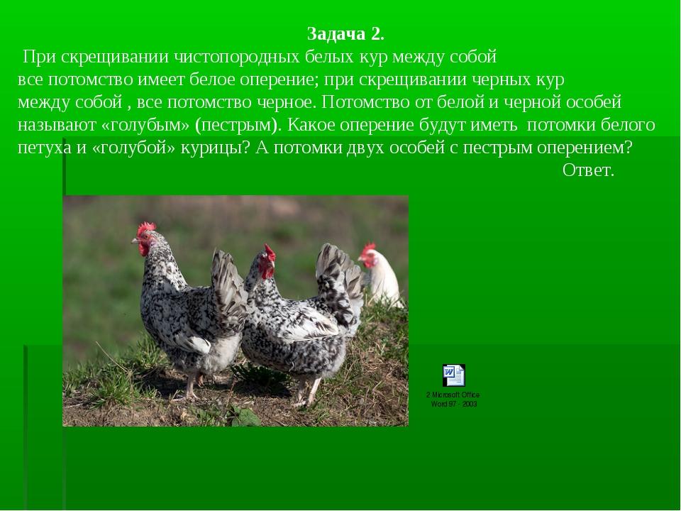 Задача 2. При скрещивании чистопородных белых кур между собой все потомство и...