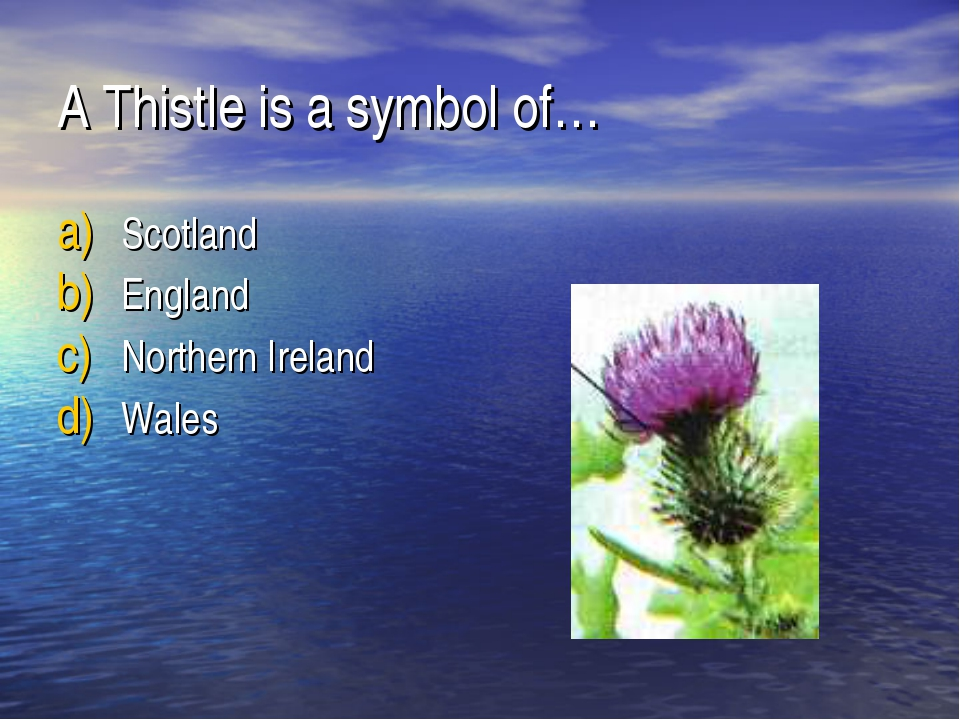 A Thistle is a symbol of… Scotland England Northern Ireland Wales