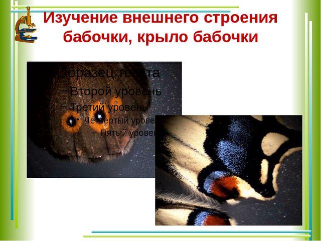 Изучение внешнего строения бабочки, крыло бабочки