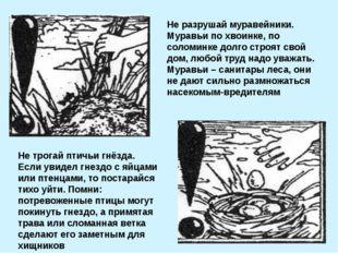 Не разрушай муравейники. Муравьи по хвоинке, по соломинке долго строят свой д