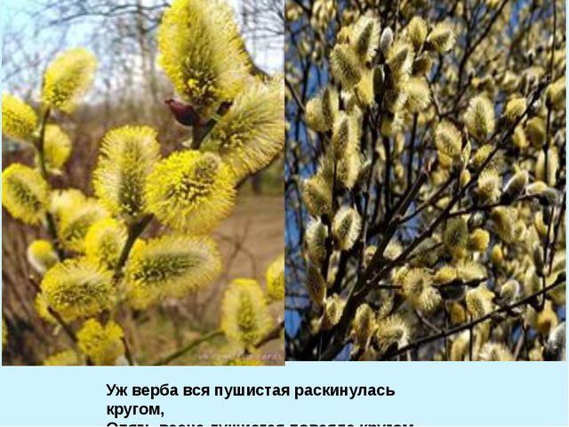 Уж верба вся пушистая раскинулась кругом, Опять весна душистая повеяла кругом