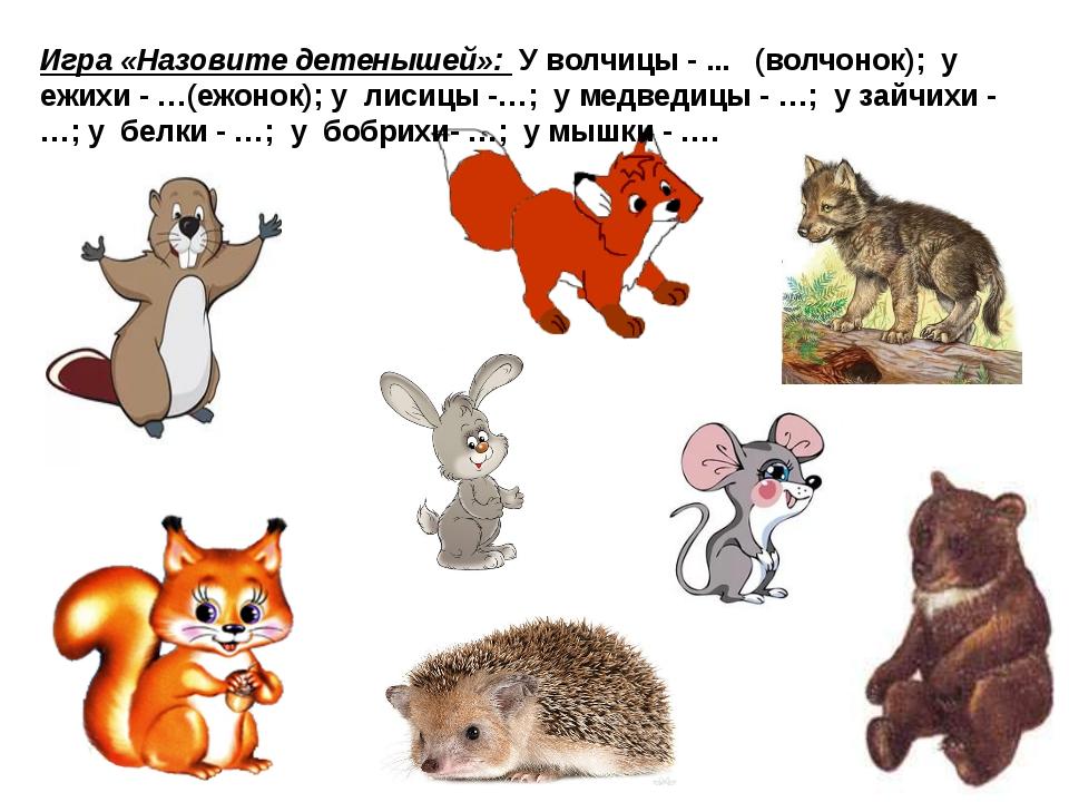 Игра «Назовите детенышей»: У волчицы - ... (волчонок); у ежихи - …(ежонок); у...