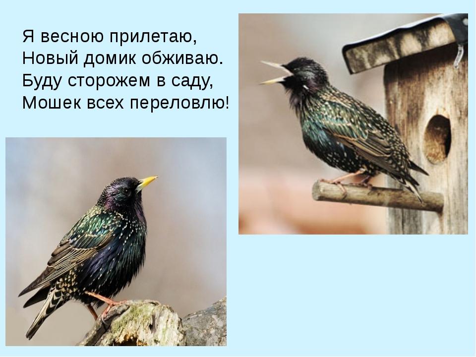 Я весною прилетаю, Новый домик обживаю. Буду сторожем в саду,  Мошек всех пе...