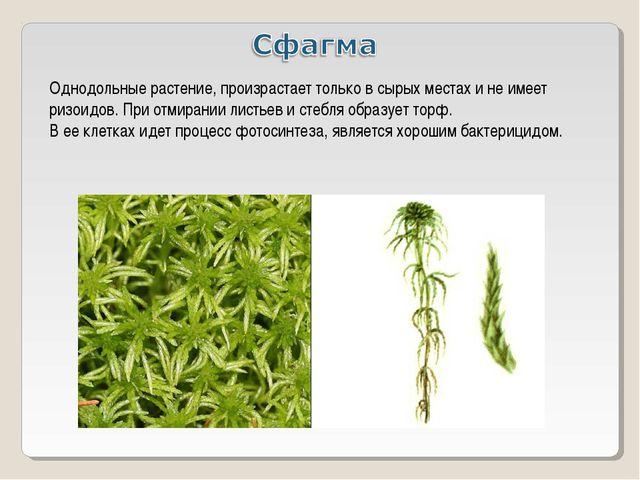 Однодольные растение, произрастает только в сырых местах и не имеет ризоидов....