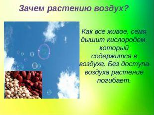 Зачем растению воздух? Как все живое, семя дышит кислородом, который содержит