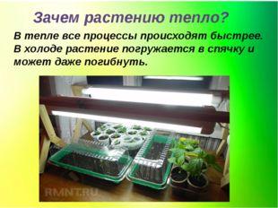 Зачем растению тепло? В тепле все процессы происходят быстрее. В холоде расте