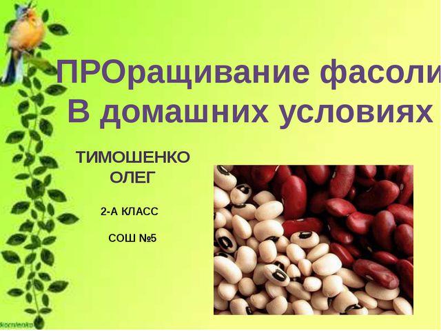 ПРОращивание фасоли В домашних условиях ТИМОШЕНКО ОЛЕГ 2-А КЛАСС СОШ №5
