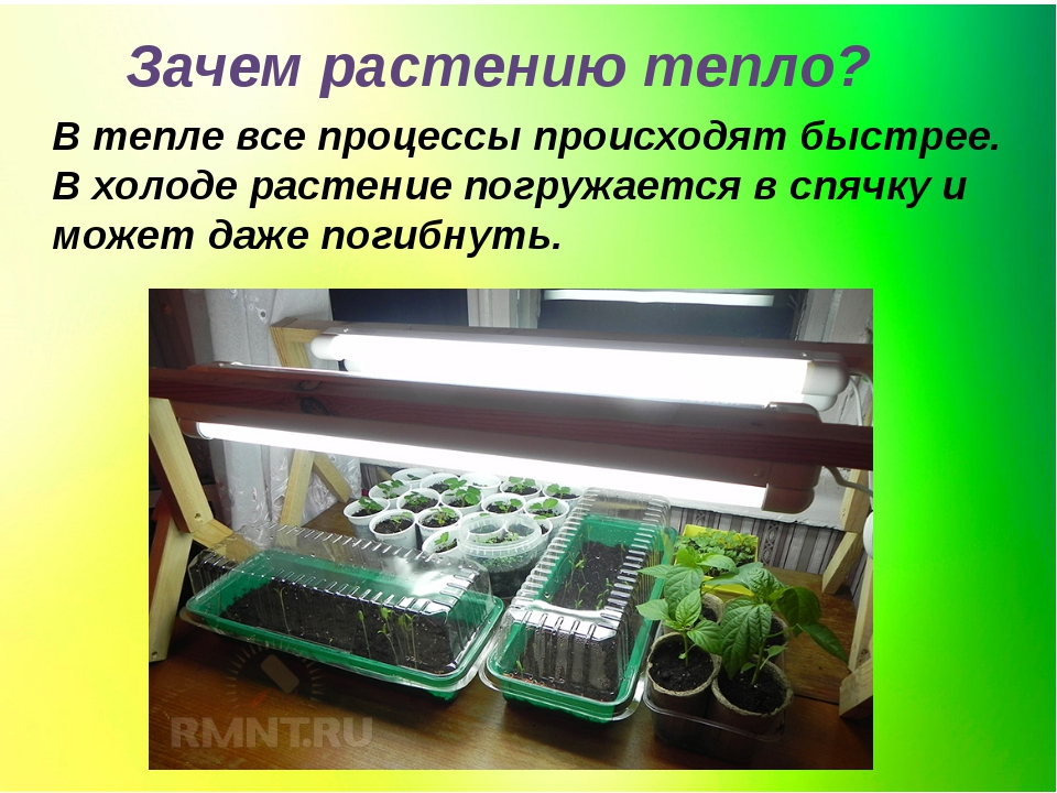 Зачем растению тепло? В тепле все процессы происходят быстрее. В холоде расте...