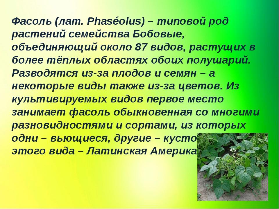 Фасоль (лат. Phaséolus) – типовой род растений семейства Бобовые, объединяющи...