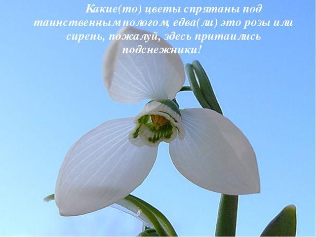Какие(то) цветы спрятаны под таинственным пологом, едва(ли) это розы или си...