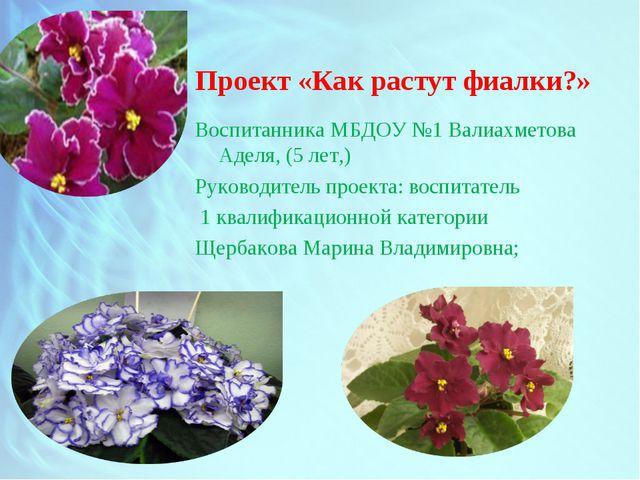 Проект «Как растут фиалки?» Воспитанника МБДОУ №1 Валиахметова Аделя, (5 лет,...