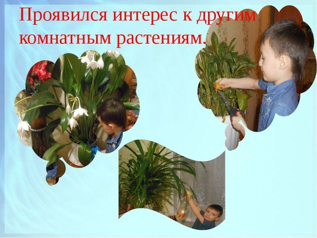 Проявился интерес к другим комнатным растениям.