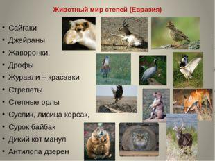 Животный мир степей (Евразия) Сайгаки Джейраны Жаворонки, Дрофы Журавли – кра