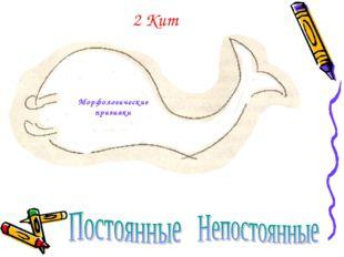2 Кит Морфологические признаки