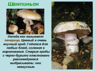 Шампиньон Иногда его называют печерица. Ценный и очень вкусный гриб. Годится