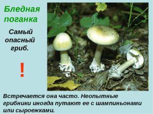 Бледная поганка Самый опасный гриб. Встречается она часто. Неопытные грибники