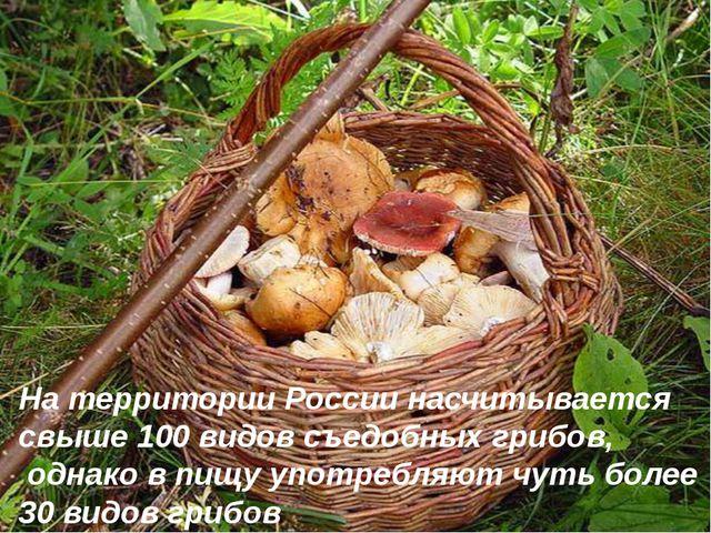 На территории России насчитывается свыше 100 видов съедобных грибов, однако в...
