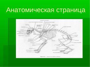 Анатомическая страница