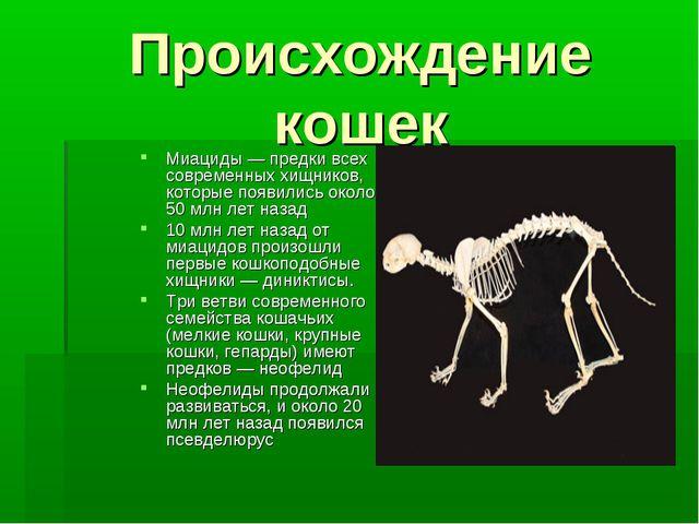 Происхождение кошек Миациды — предки всех современных хищников, которые появи...