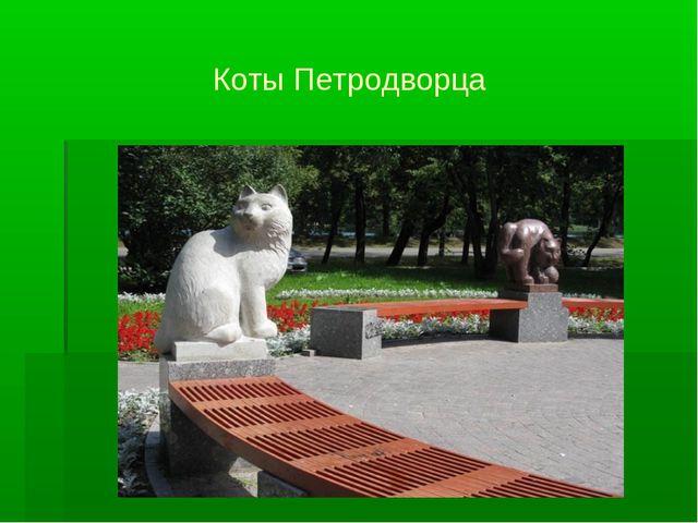 Коты Петродворца